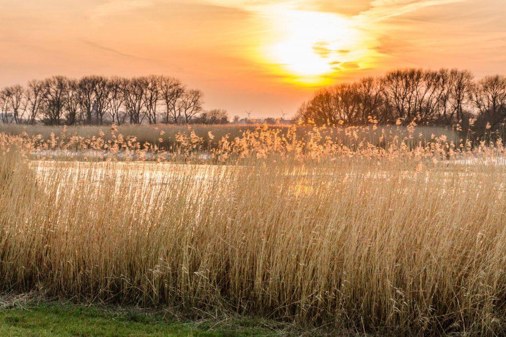 Weserufer bei Sonnenuntergang